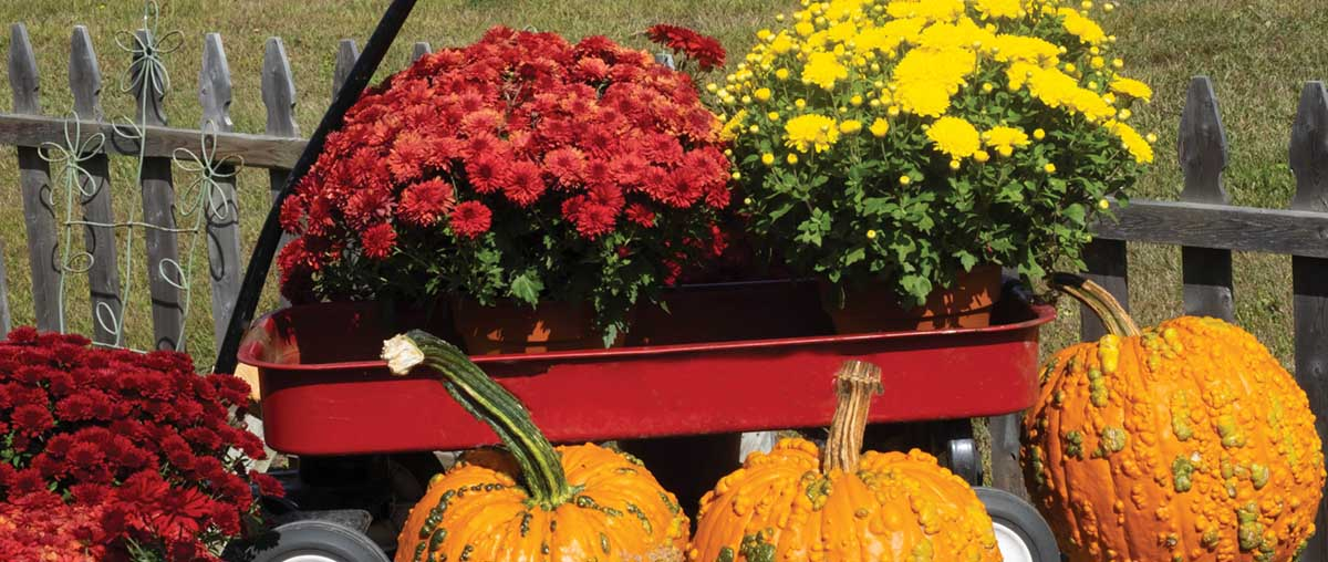 Fall Gardening Is Here